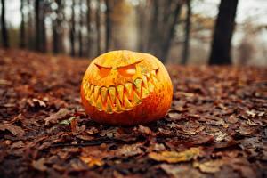 Hintergrundbilder Kürbisse Halloween Herbst Bokeh Blattwerk