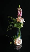 Wallpaper Rose Snapdragons Black background Vase Flowers