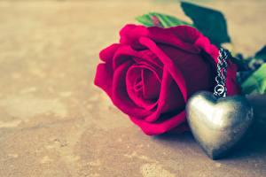 Fotos Rosen Valentinstag Herz Souvenir Blumen
