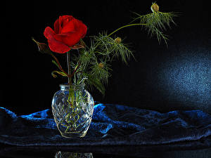 Bilder Rose Vase Ast Rot Blumen