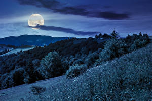 Fotos Himmel Gebirge Wälder Nacht Mond Gras Natur