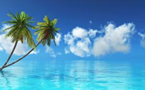 Photo Sky Sea Ocean Tropics Palm trees Nature