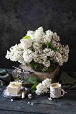 Photo Still-life Syringa Coffee Cappuccino Boards White Cup flower Food