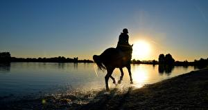 Picture Sunrise and sunset Horse Lake Water splash Silhouette animal