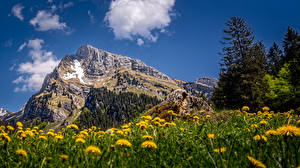 Wallpapers Switzerland Mountains Dandelions Crag Alps Clouds Altmann, Toggenburg Nature pictures images