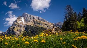 Image Switzerland Mountain Taraxacum Crag Alps Clouds Altmann, Toggenburg Nature