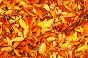 Bilder Textur Herbst Blattwerk Orange Natur