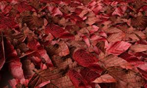 Bilder Textur Herbst Blattwerk Rot Natur