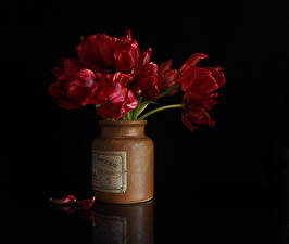 Photo Tulips Black background Red Petals Jar Flowers