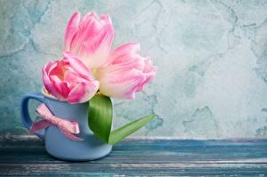 Fotos Tulpen Rosa Farbe Becher Blumen