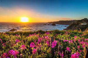 Fonds d'écran USA Côte Levers et couchers de soleil Californie Soleil Mendocino