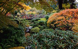 Tapety USA Ogród Mosty Krzaki Potok Portland Japanese Garden Natura zdjęcia zdjęcie