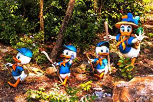 Desktop hintergrundbilder USA Parks Entenvögel Florida Design Disney's Animal Kingdom park Natur