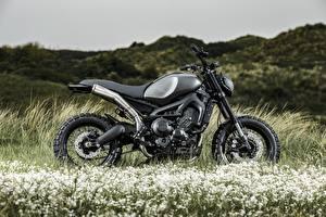 Fotos & Bilder Yamaha Tuning Gras Seitlich XSR900 Monkeebeast Motorrad