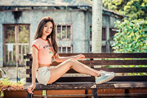 Photo Asiatic Brown haired Bench Sitting Legs Shorts T-shirt Glance young woman