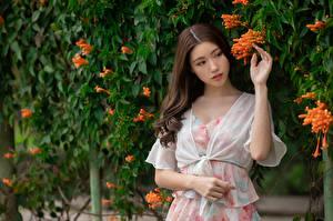 Fotos Asiatisches Braune Haare Kleid Hand junge Frauen