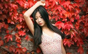 Bilder Asiatische Brünette Blatt Hand Mädchens