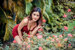 Bilder Asiatische Posiert Kleid Dekolleté Blick Braunhaarige junge Frauen