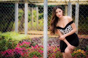 Bakgrunnsbilder Asiatisk Posere Gjerder Blikk Brunt hår kvinne ung kvinne