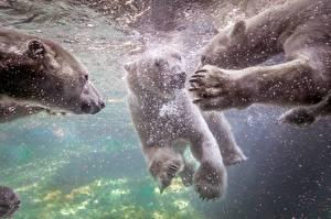 Fotos Bären Eisbär Unterwasserwelt Pfote ein Tier