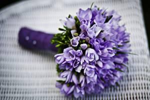 桌面壁纸,,花束,薰衣草,特寫,散景,雪青色,花卉