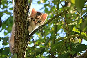 Pictures Cats Branches Foliage Kitty cat Staring Animals
