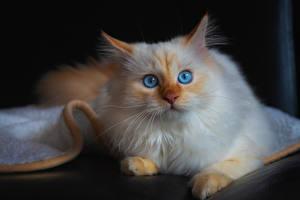Bilder Katzen Starren