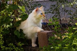 Hintergrundbilder Katzen Blick ein Tier