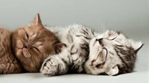 Image Cats Gray background 2 Esting Sleeping Kitty cat Paws