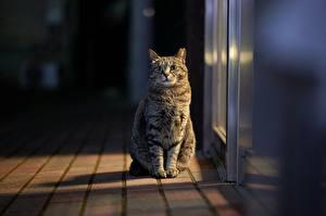 Hintergrundbilder Katze Sitzt Starren Bokeh Tiere