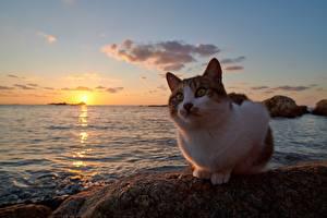 Fotos Hauskatze Morgendämmerung und Sonnenuntergang Ozean Tiere