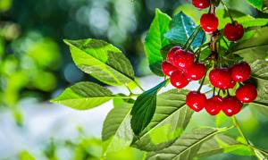 Picture Cherry Summer Leaf Branches Bokeh Food