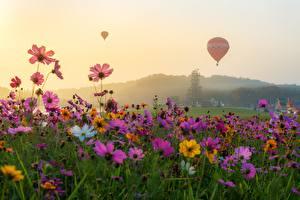 Bureaubladachtergronden Cosmos geslacht Grasland Luchtballon Bloemen