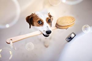 Bilder Hunde Badezimmer Lustige ein Tier