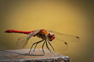 Bilder Libellen Insekten