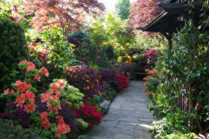 Sfondi desktop Inghilterra Giardino Azalea Cespugli Walsall Garden Natura