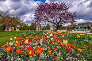 Bakgrunnsbilder Frankrike Tulipaner Vår Paris Trær  byen