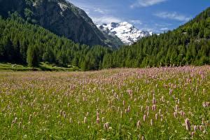 Bureaubladachtergronden Italië Berg Bos Grasland Park Alpen Gras Gran Paradiso national Park