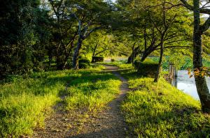 Picture Japan Kyoto Parks Trees Trail Grass Daikaku-Ji Nature
