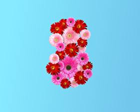Wallpaper March 8 Gerbera Colored background