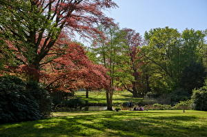 Pictures Netherlands Parks Trees Grass Graveland Nature