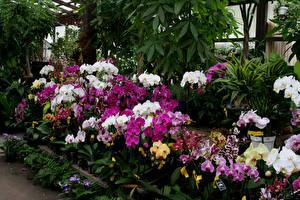Bilder Orchidee Viel Mehrfarbige