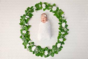 Desktop hintergrundbilder Pfingstrosen Baby Schläft Kinder