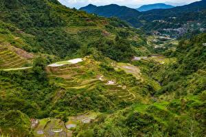 Sfondi desktop Filippine Montagna Campo agricolo Alberi Vista dall'alto Banaue rice terraces, Ifugao Natura