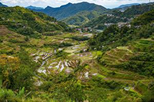 Bilder Philippinen Gebirge Acker Bäume Banaue rice terraces, Ifugao Natur