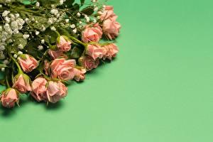 Fotos Rose Blumensträuße Farbigen hintergrund Vorlage Grußkarte Blüte