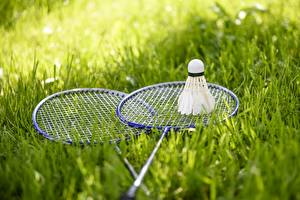 Picture Grass Shuttlecock, Badminton