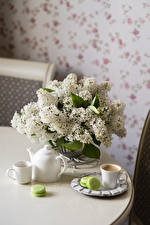 Picture Still-life Syringa Coffee White Cup Macaron flower Food