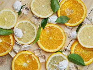 Fotos Textur Orange Frucht Muscheln Eis Lebensmittel