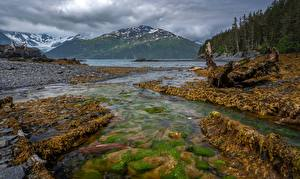Picture USA Alaska Mountain Stone Rivers Forests Whittier Nature